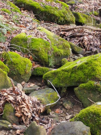 Salt Fork State Park: Dry creek