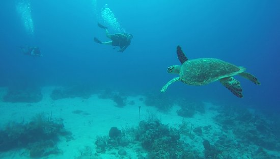 South Caicos: great picture of the turtle with us in the background