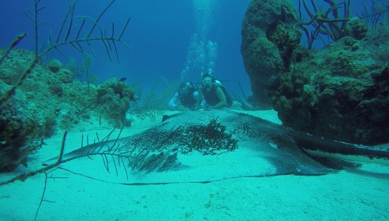 South Caicos: picture taken by Francisco of large sting ray with us in the background