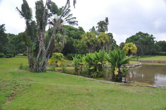 Curepipe: Garden