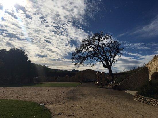 Santa Ynez, แคลิฟอร์เนีย: paisaje viñedo