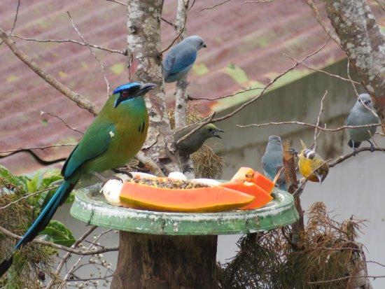 Historias Lodge: Lovely birds on the bird feeder