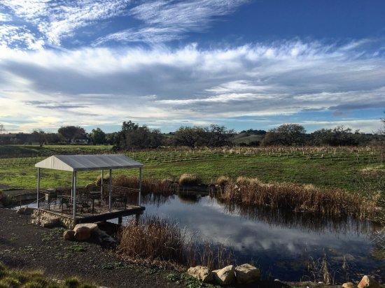 Los Olivos, CA: paisaje viñedo