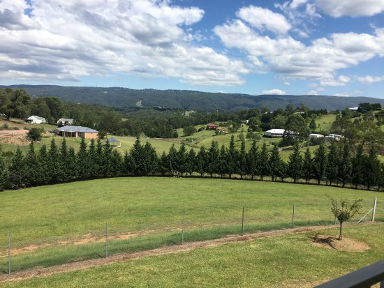 Kurrajong Photo