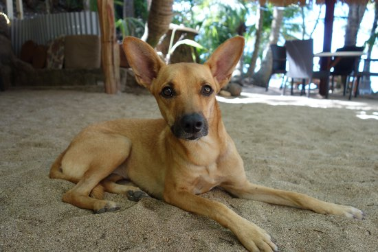 Calibishie, Dominica: Molly! (Owner's dog)