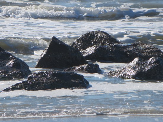 Redington Shores, FL: You can find good shells among the rocks
