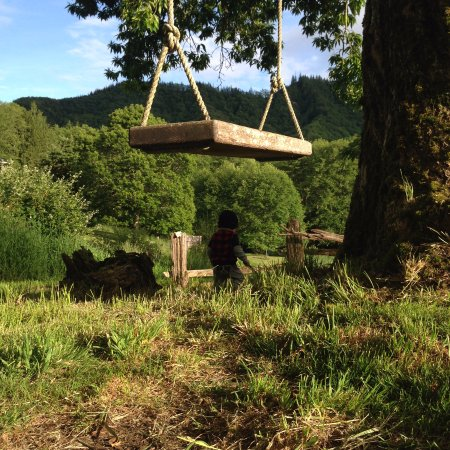 Skamokawa, WA: Swing on Pioneer Chestnut tree