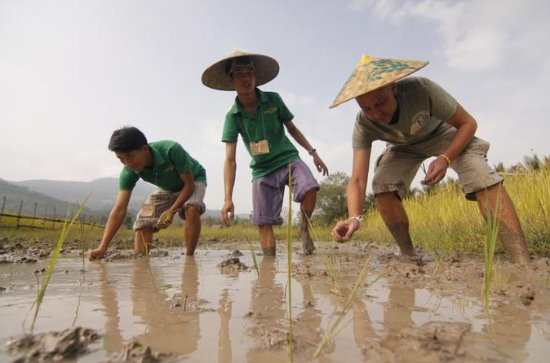 Rice Cultivation and Kuang Si...