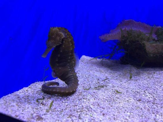 uShaka Sea World Aquarium: photo9.jpg