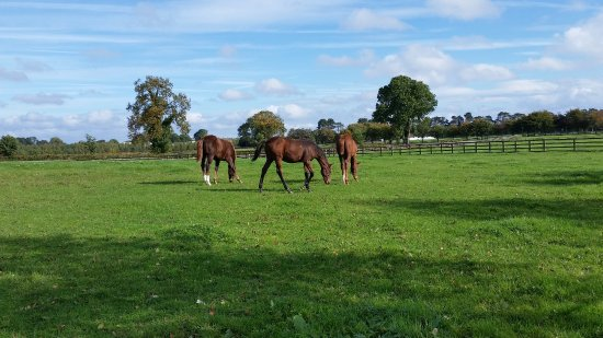 Irish National Stud & Gardens: Some of the studs out to pasture.