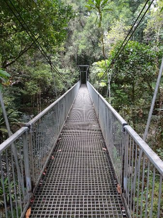 Daintree Region, Australia: Small bridge walk