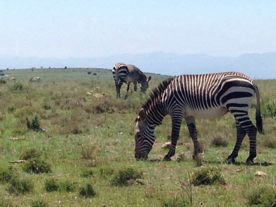 Mountain Zebra National Park: photo3.jpg