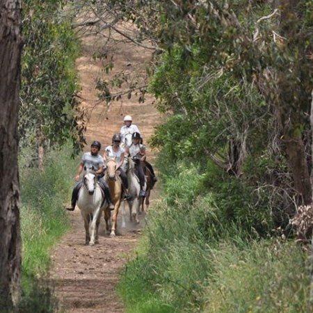 Arthurs Seat, Australia: Beautiful Bush Trail Rides