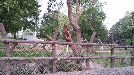 owl in tree picture of park bhavnagar tripadvisor