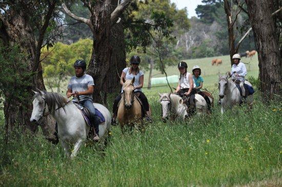 Arthurs Seat, Australia: Arthur's Seat Trail Rides