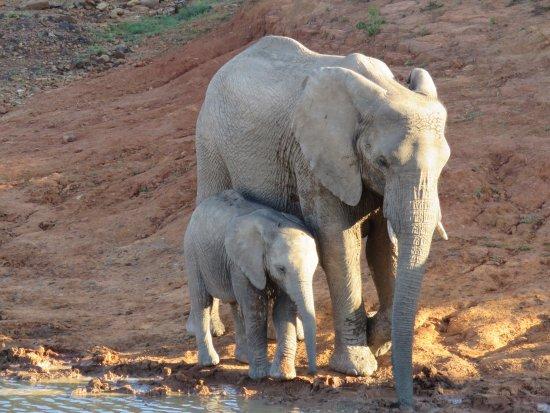 Shamwari Game Reserve, South Africa: Riverdene Lodge