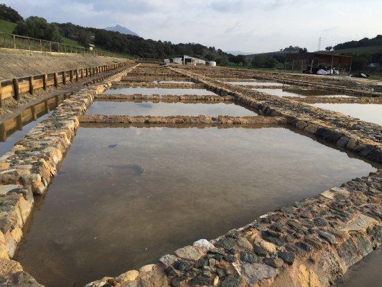 Prado del Rey, España: Balsas de extracción de sal