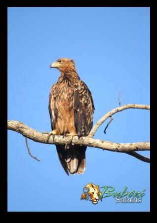 Hazyview, South Africa: Birds