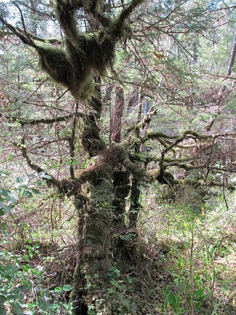 Butze Rapids Park and Trail : moss covered tree