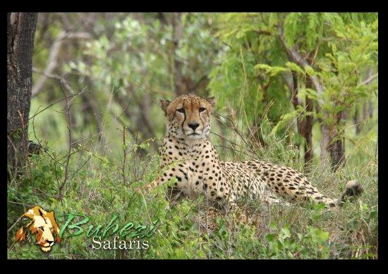 Hazyview, South Africa: Cheetah
