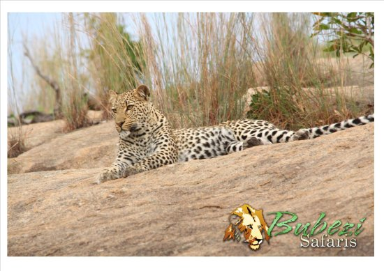 Hazyview, South Africa: Leopard