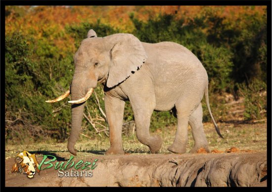 ฮาซีวิว, แอฟริกาใต้: Elephant