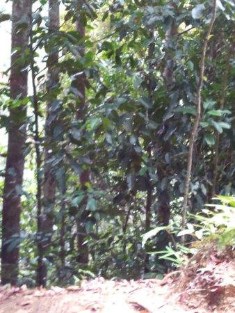 Provincia Sur, Sri Lanka: trees