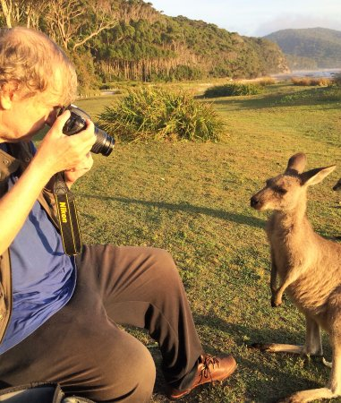 Tuross Head, Australia: VIP Private Tours knows places where guests get close to Australian wildlife Tom from the USA he