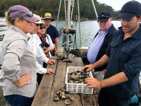 Tuross Head, Australia: VIP Food Trail Tour takes guests on the water to a working oyster farm for oyster tasting