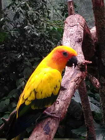 Kuranda, Australia: For the Birds