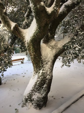 Arcevia Giardino Giacomo Leopardi e la magia della neve