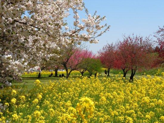 Обузе-маки, Япония: 4月下旬