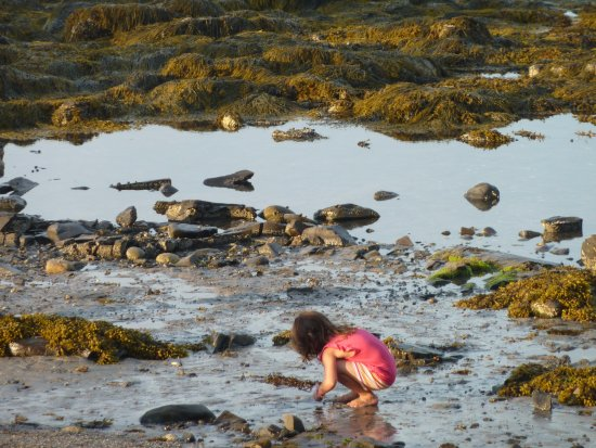 Shore Path Cottage: A young traveller exploring the Shore Path at low tide