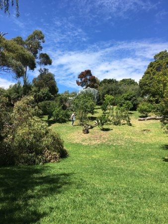 Dromana, Avustralya: Just a few shots of the beautiful gardens and surroundings of the house.