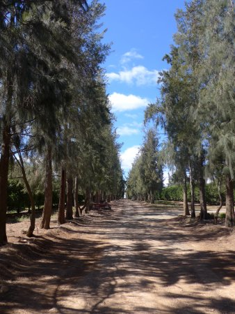 Addo, Sudáfrica: avenue up to farm