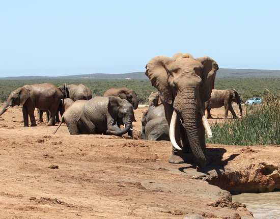 Addo, Afrique du Sud : local attractions!