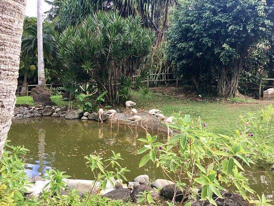 Deshaies, Guadeloupe: photo4.jpg