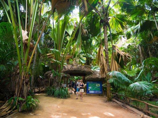 Praslin Island, Seychelles: 樹々の間の道を進みます
