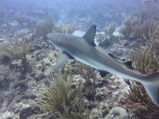 Ocean Explorers Dive Center: Prachtige ervaring te duiken met haaien om je heen.