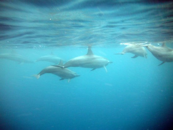 Isa Mauritius Swimming With The Dolphins N BBQ At Benitier Island Isamauritiusgmail