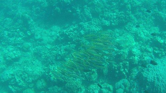 Grande Riviere Noire: snorkelling tres sympathique