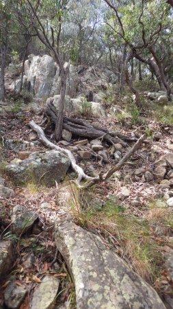 Fingal Bay, Αυστραλία: nature