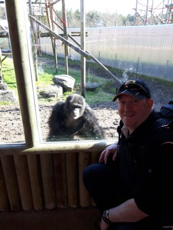Monkey World: They even pose for photos!
