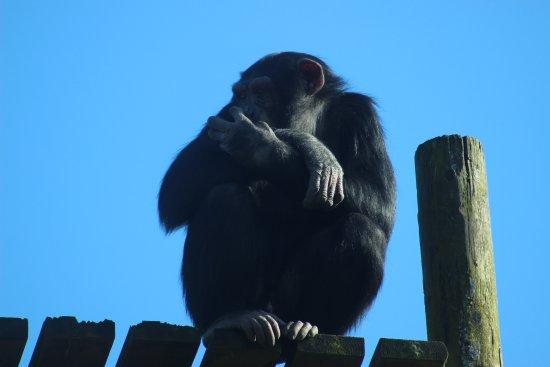 Monkey World: Just sat chilling!
