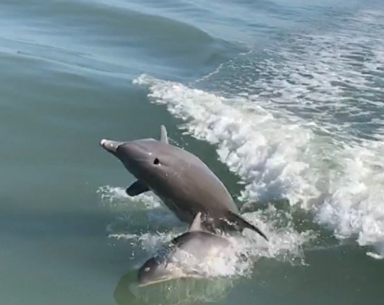 Dreamlander Tours: Dolphin mother and calf