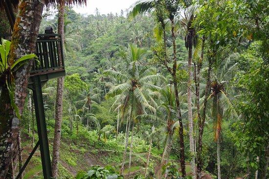 Tegalalang, Indonesia: Вид с террасы.