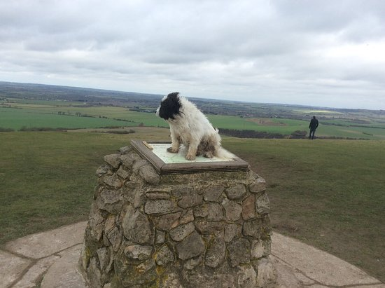 Berkhamsted, UK: Koda enjoying the windy summit of Ivanhoe Beacon