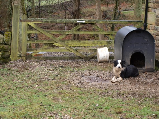 Edale, UK: Upper Booth Dog  :)