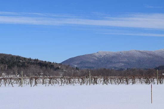 Cambridge, VT: Winter in the vineyard overlooking Mt. Mansfield at Boyden Valley Winery