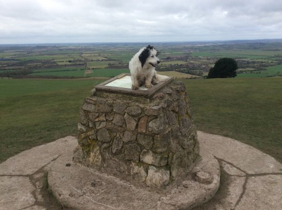 Berkhamsted, UK : Koda at the summit of Ivanhoe Beacon...great views for a great walk